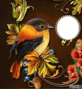 beauriful bird