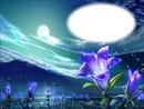 Fleur mauve - clair de lune