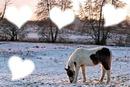 Cheval en neige