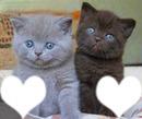 chat gris chat noir