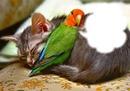 Ennemis-amis-chat-perruche