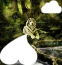 tigre 6