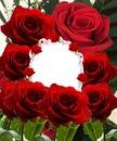 Cc Mas rosas rojas