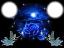 rose bleu nuit