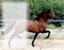 caballo de guardatinajas1