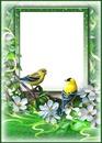 Cadre-oiseaux-fleurs