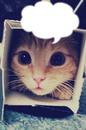 Chaton-carton