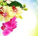 Beautiful flowers like you !#1