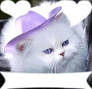 chat blanc avec son chapeau et 3 cadres