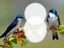 Nature - oiseaux