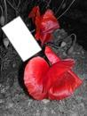 fleur de pavot en noir blanc