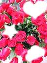 rose et de l'amour