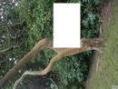 Monter sur un arbre.