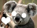 Koala :3♥