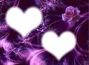 rosa violeta2