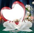 Cygnes  Coeur