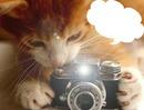 chat qui prend en photo 1 photo