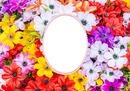 Cc Flores de campo