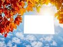 herfst  in de  lucht