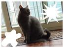 camilla e muci i miei gatti