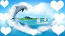 pour les amoureux des dauphins