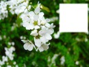 cadre vert avec fleurs blanches