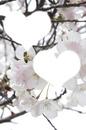 Amour en fleurs