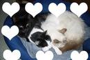mes cats