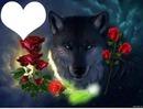 loup  bonne nuit