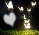Goodnight Butteflies