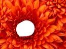 Visage dans fleur