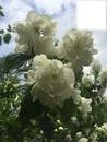 Просто цветы