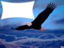 belle aigle