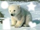 ourson dans la neige