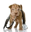 dr kutya