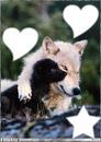 l'amour de loups