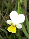 1 photo fleur Cris