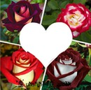 coeur et 4 roses