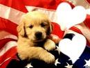 bébé chien mignon
