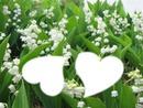 la fleur du mois de mai