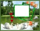 Amour de cygnes*