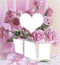rose coeur rose scène