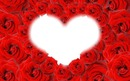 ma rose rouge