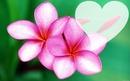 fleur de Tahiti ...