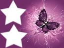 papillon et ses 2 étoiles
