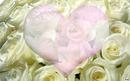 Rosa e coração..