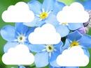 flores y nubes