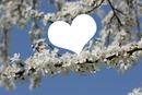 cœur de printemps