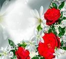 Spiegel der Rose