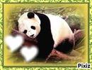 ptit panda qui dort